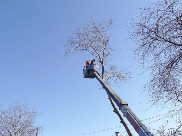 Planuojate kirsti medį? Štai, ką reikėtų žinoti