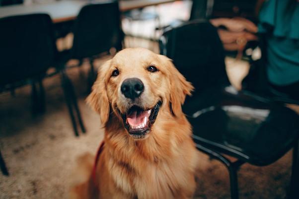 Kodėl reikia prižiūrėti šunų dantis?