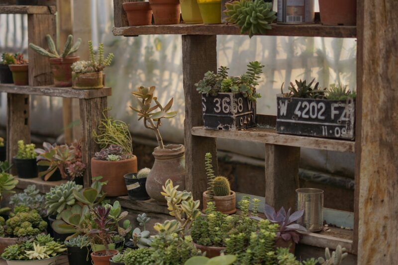 Prekyba augalais gražaus sodo įrengimui